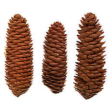 All Living Things® 3-pack Pine Cone Small Pet Chew