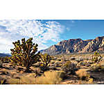 All Living Things® Desert Panorama Reptile Cling Background