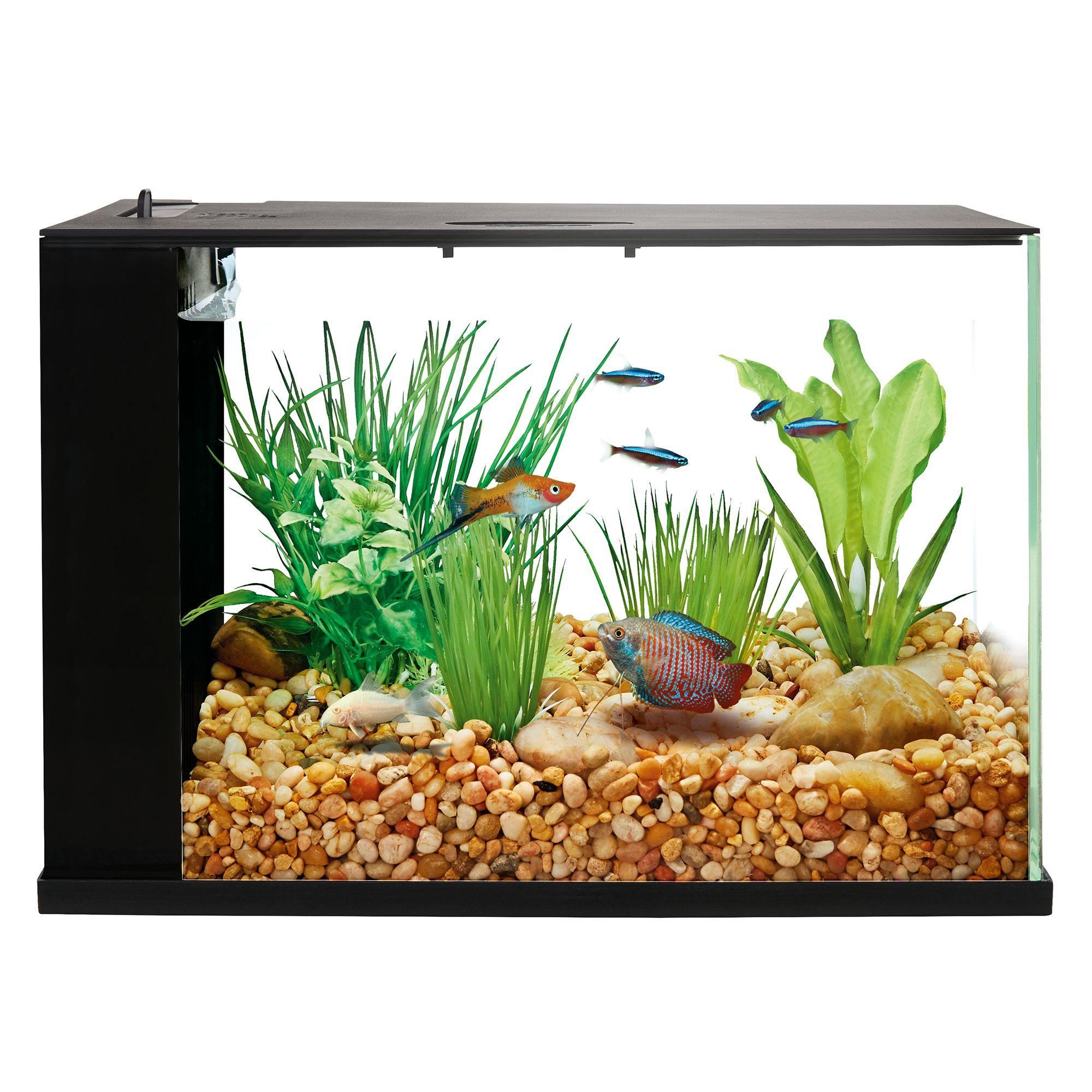 Top Fin Indulge Trade 3 Gallon Aquarium Fish Aquariums Petsmart