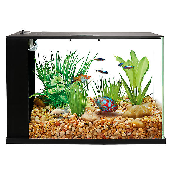Top Fin Indulge Trade 3 Gallon Aquarium Fish Aquariums Petsmart