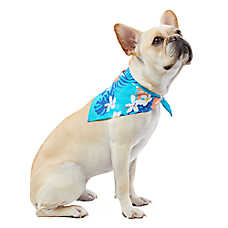 Top Paw® Summer Fun Hawaiian Pet Bandana