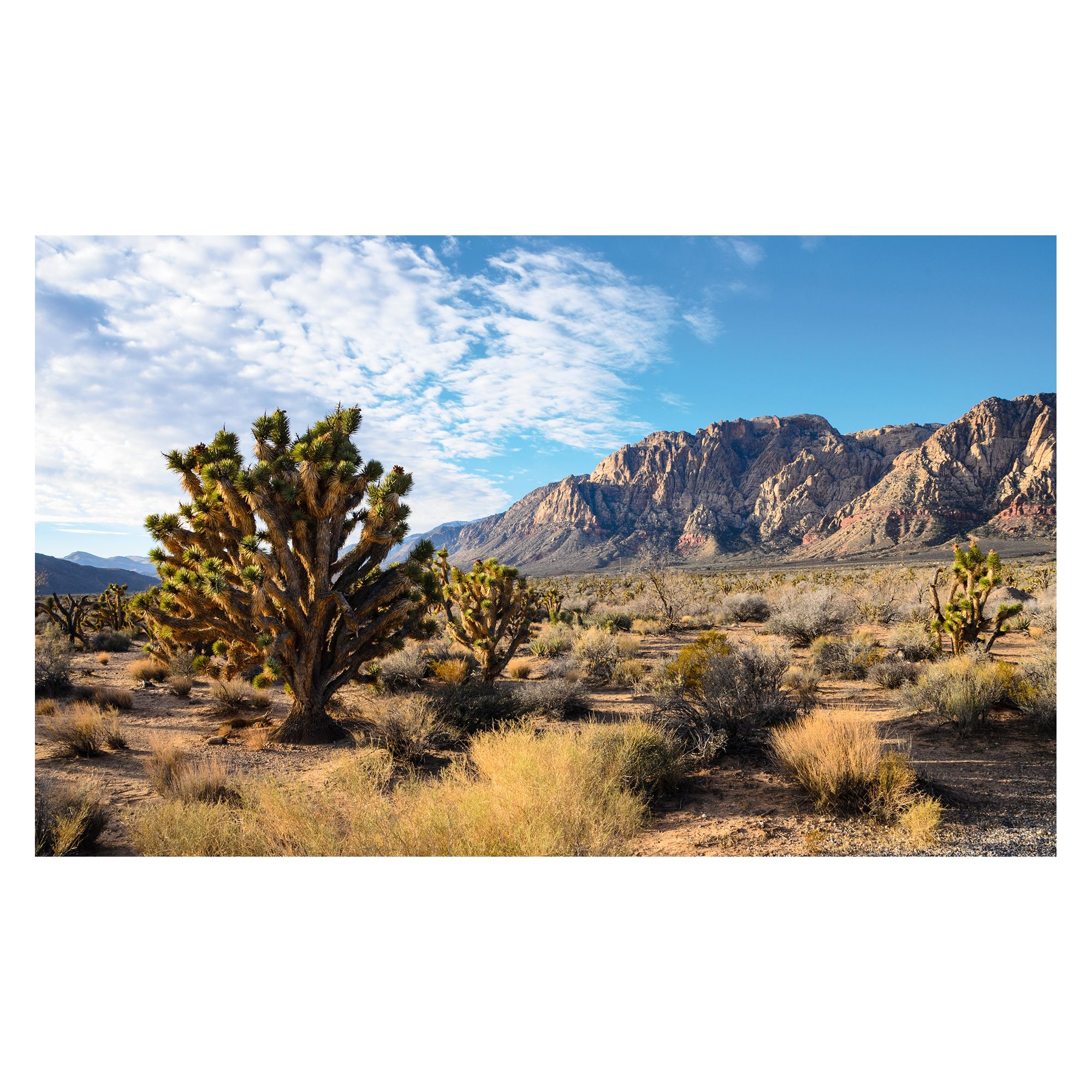 Thrive Desert Cling Background For Terrarium Reptile Habitat Decor Petsmart