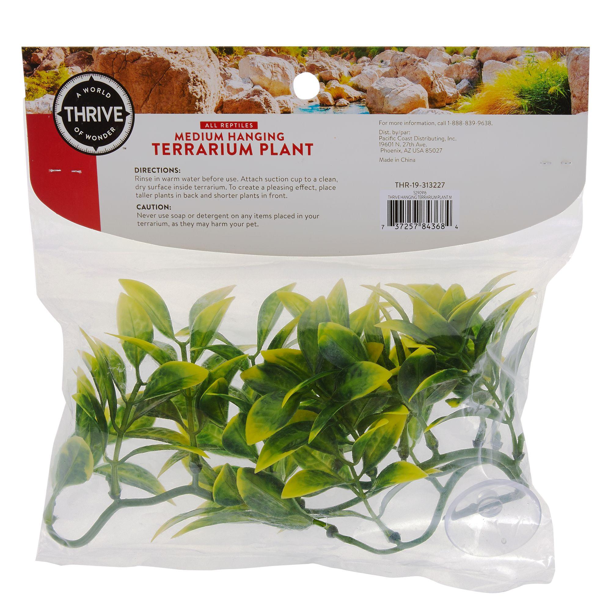 Thrive Medium Hanging Terrarium Plant Reptile Habitat Decor