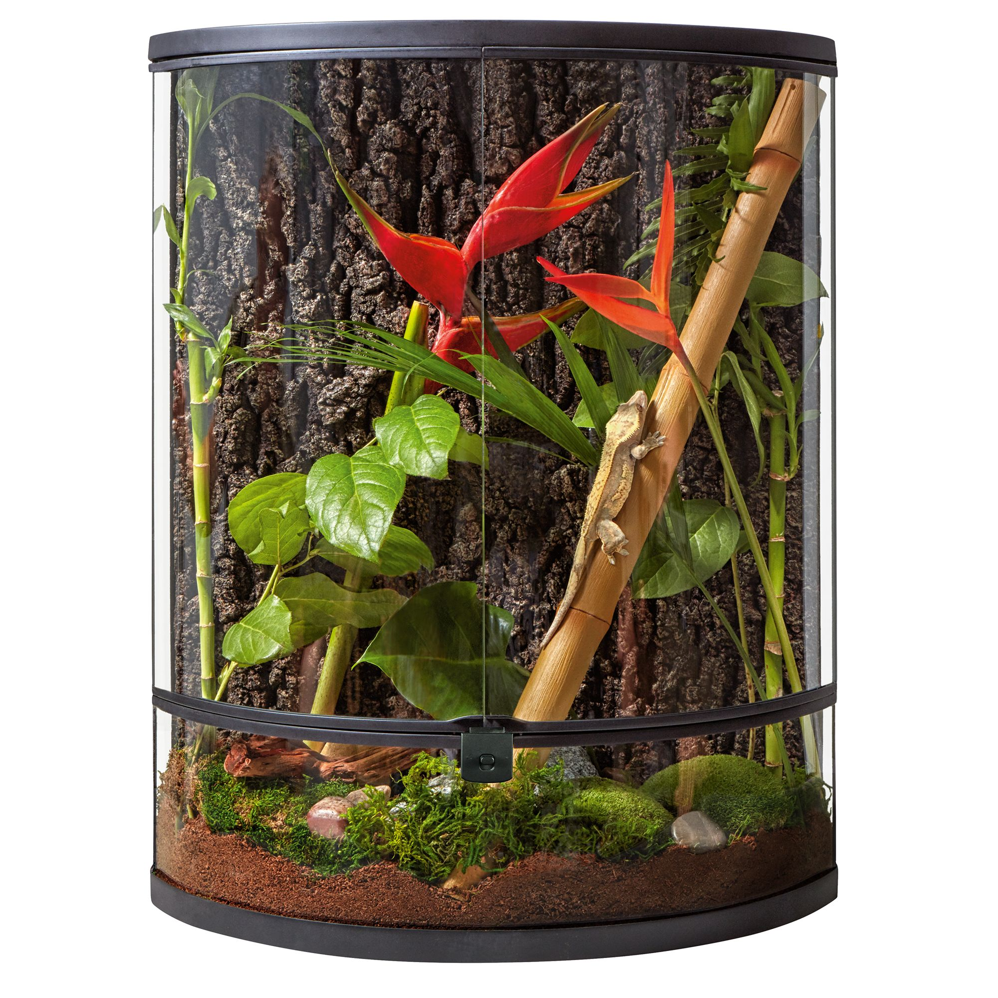 Thrive Tropical Reptile Vertical Crescent Terrarium 20 Gallon Reptile Terrariums Petsmart