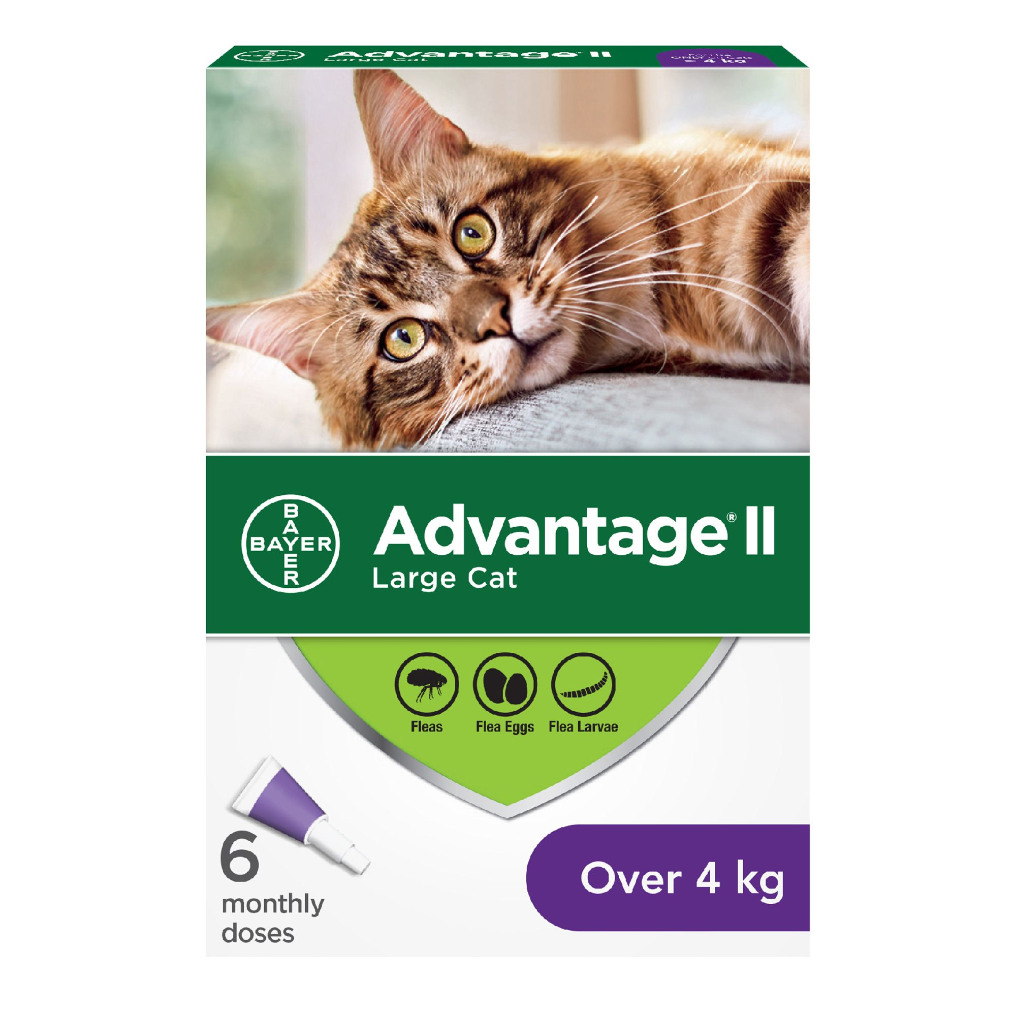 Advantage II Large Cat Once-A-Month Topical Flea Treatment - Over 4 kg 6 Count