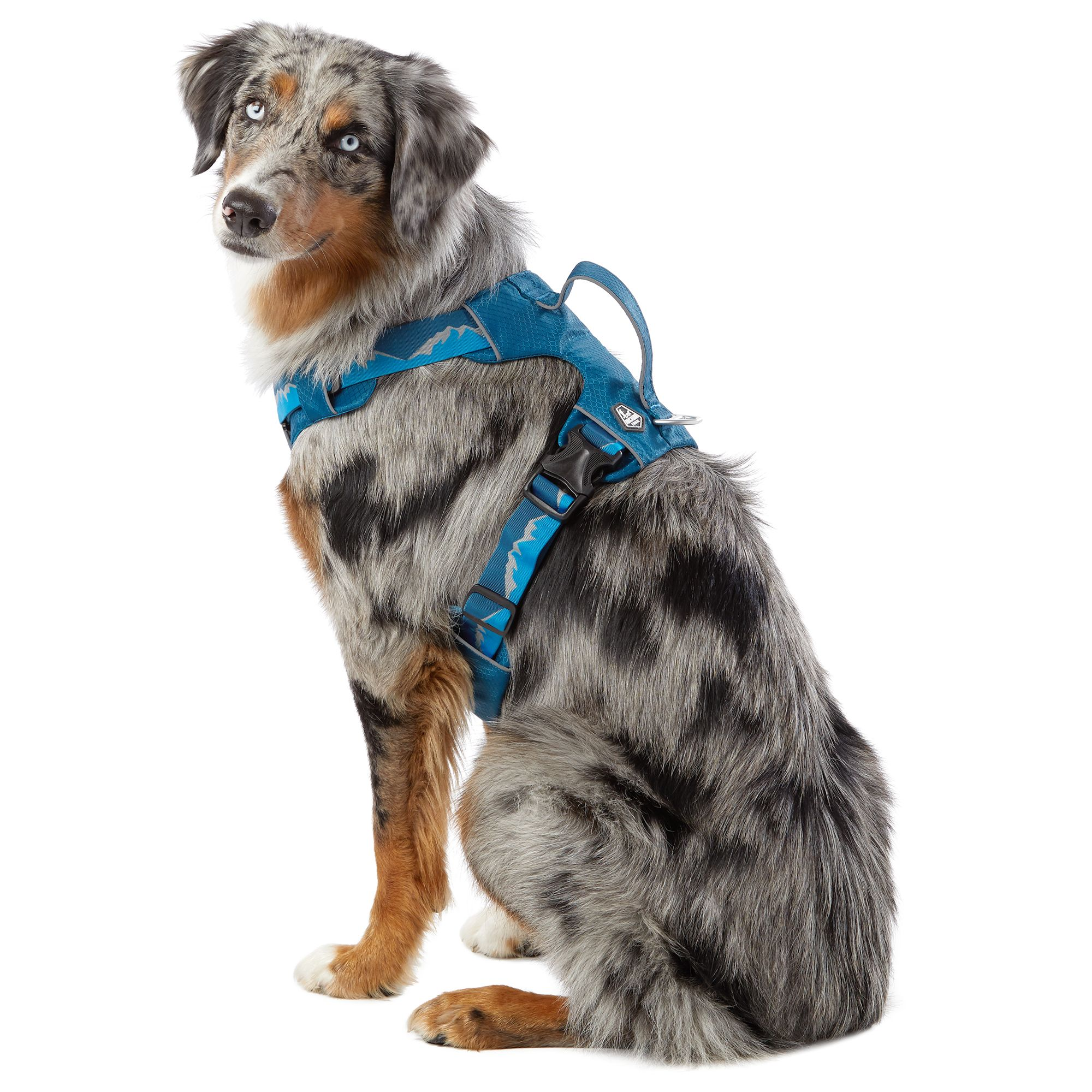 Arcadia Trail Lightweight Dog Harness: Reflective Blue Medium Dog Harness    PetSmartPetSmart