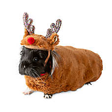 Small Animal Holiday Costumes and Apparel