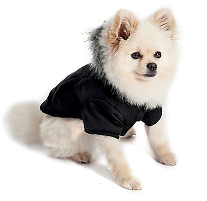 Keeping Your Pet Healthy During Winter, Pomeranian