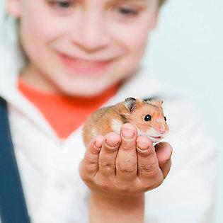 Long Haired Hamster Petsmart 53