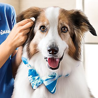 Flea Amp Tick Solutions Petsmart