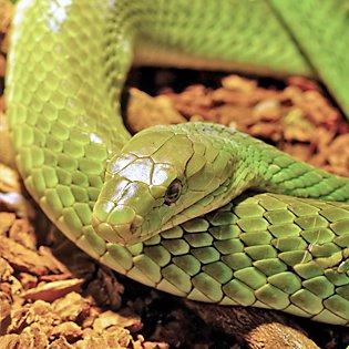 Reptile Care: Keeping Pet Lizards, Snakes & Frogs | PetSmart