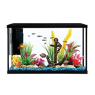 Decorate your fishes' new home