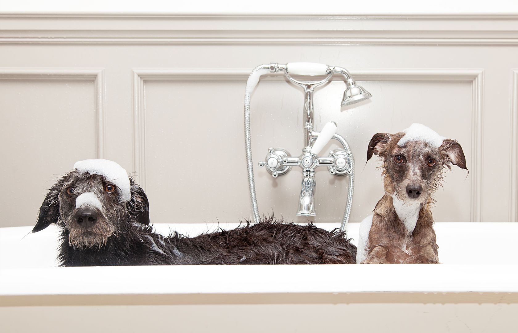 The Dapper Dog: How to Groom Your Pooch