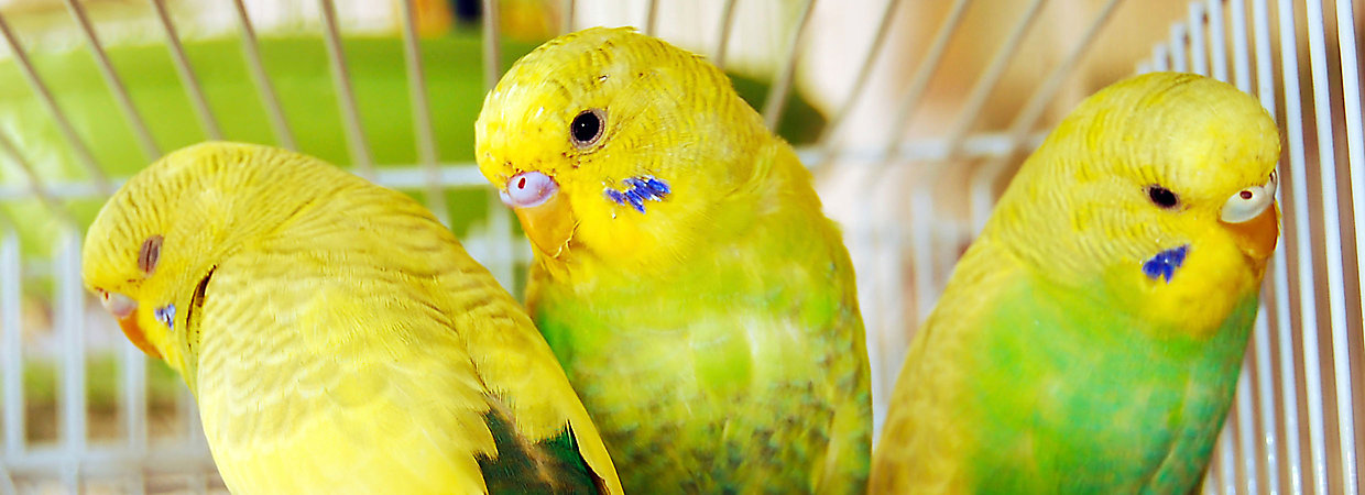 Parakeet Care Sheet & Supplies | PetSmart