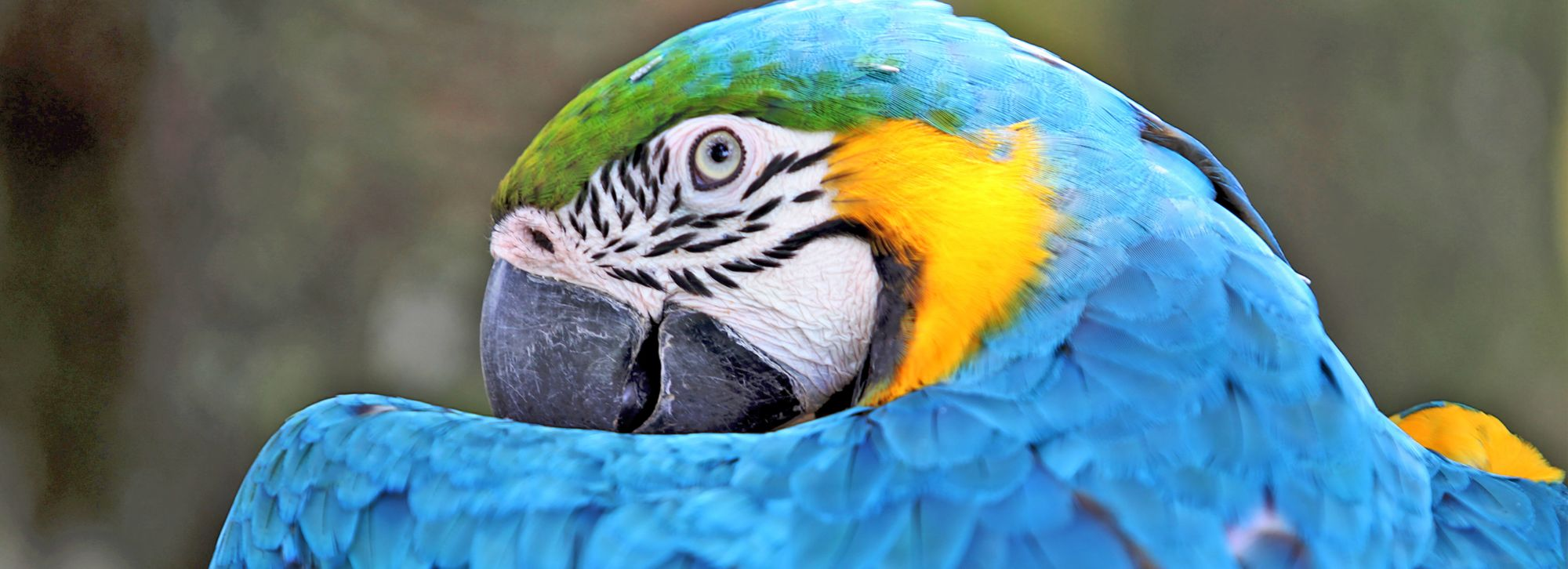 A Set-up Guide for Your New Parrot