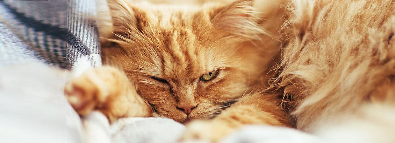 Cat Food For Sensitive Stomachs Petsmart Food Center