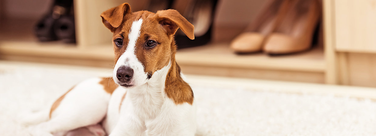 apartment dogs tips for apartment living petsmart