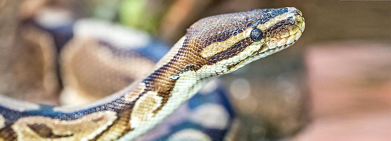 Healthy Snake Guide | PetSmart
