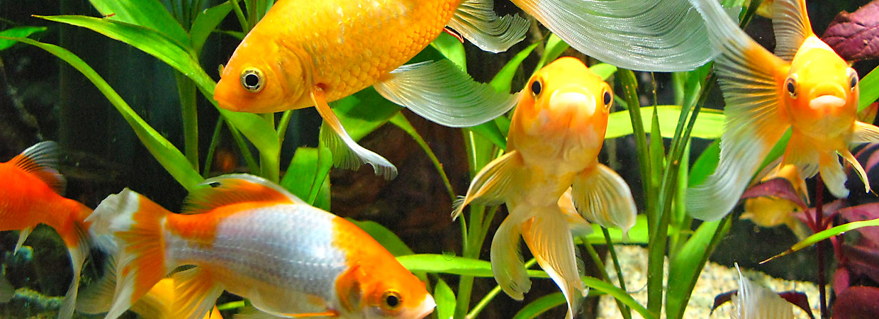 Aquarium Water Care For Healthy Fish Tanks Petsmart