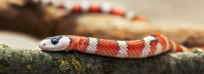 The Best Pet Snakes Choosing A New Pet Petsmart