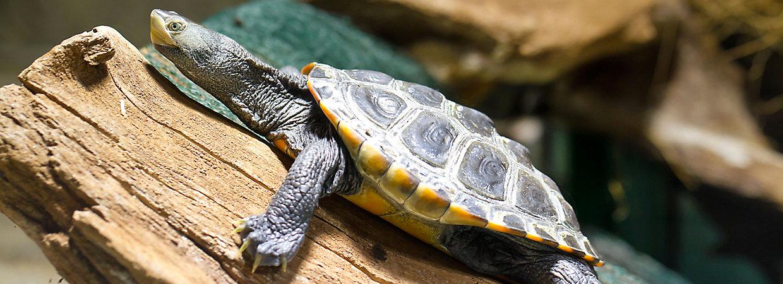 Setup For New Turtle Or Tortoise Petsmart