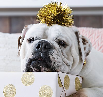 A Pet Safe Holiday Menu for Dogs