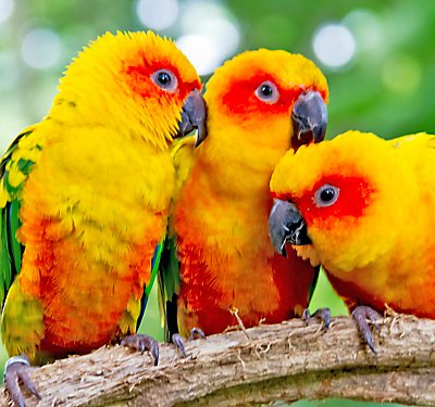 Conure Care Guide