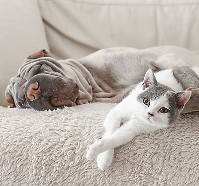 Flea and Tick Products for Dogs and Cats