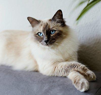Advantage For Cats Fleas Petsmart