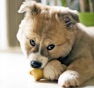 Get Through Your Puppy's Teething Phase