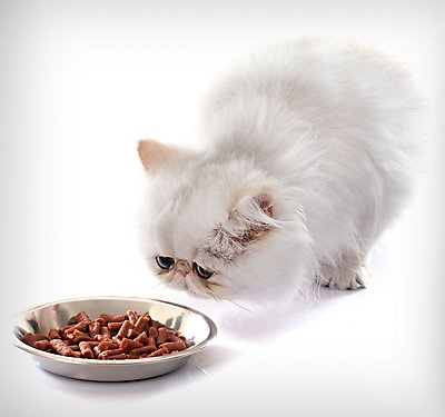Getting Your Finicky Cat to Eat
