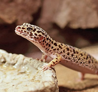 Bearded Dragon Diet: Food List & Feeding Tips | PetSmart