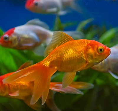 Aquarium fish food nutrition petsmart for Fish to buy