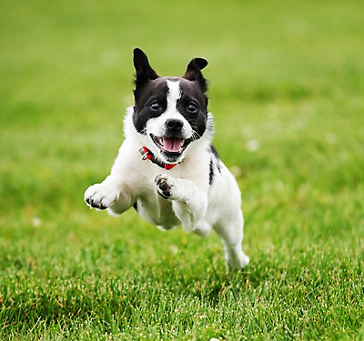 How Much Exercise Does My Dog Need?