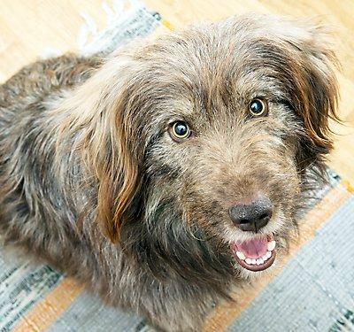 Choosing A Dog Crate Gate Or Kennel Petsmart