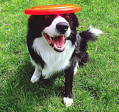 Keep Your Dog out of Trouble with a Treat-dispensing Toy