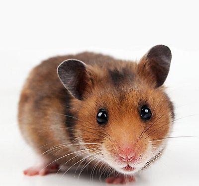 Hamster Care for Kids | PetSmart