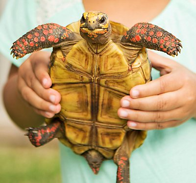 Turtle and Tortoise Checklist