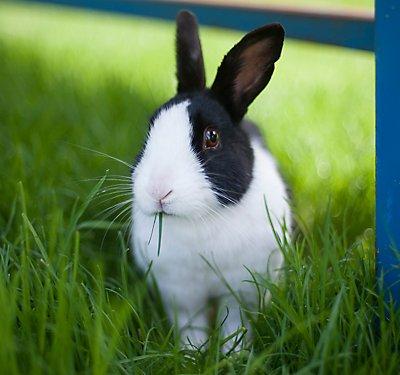 Rabbits as Pets | PetSmart
