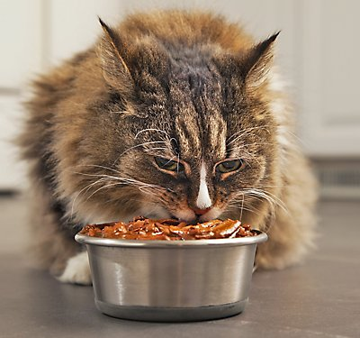 Should Your Cat's Food Be Grain Free?