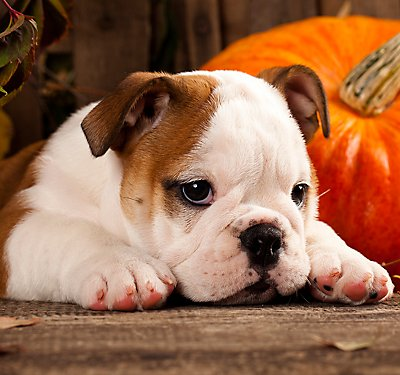 Teach Your Dog Some Halloween Tricks