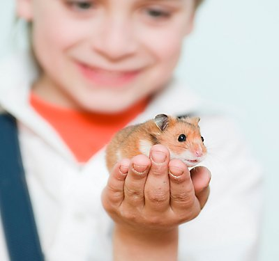 Teaching Children to Care for Small Pets