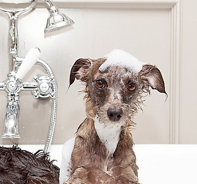 Dapper Dogs: The Art of Grooming Your Pooch