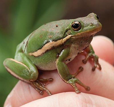 Fire Belly Toad Care Sheet & Supplies | PetSmart