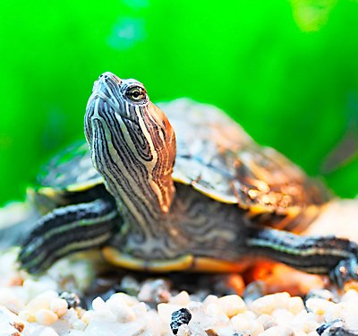 What Do I Feed My New Turtle or Tortoise?