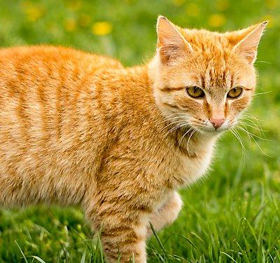 Keeping Cats Indoors Petsmart