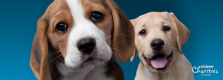 Now Dog Food Petsmart