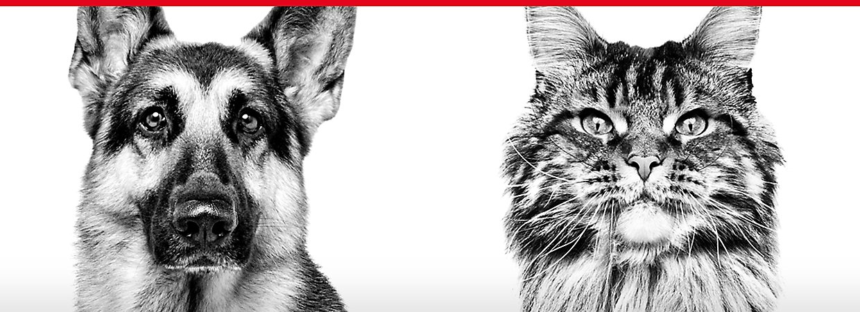Royal Canin Cat and Dog Food