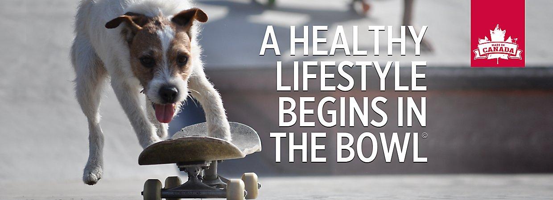 Petsmart Nutrience Dog Food