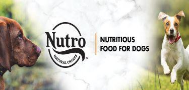NUTRO™ Dog Food